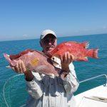 hogfish Anna Maria Island