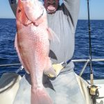 Gulf of Mexico American Red Snapper