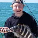 Tampa Bay sheepshead